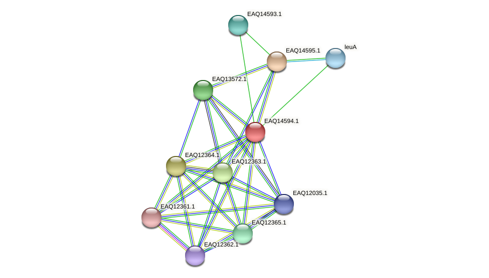 RB2654_18463 protein (Maritimibacter alkaliphilus) - STRING interaction network