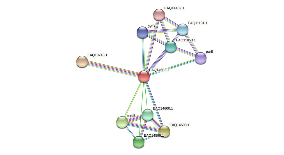 RB2654_18503 protein (Maritimibacter alkaliphilus) - STRING interaction network