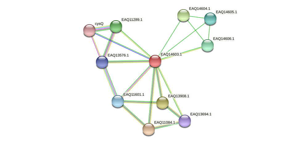 RB2654_18508 protein (Maritimibacter alkaliphilus) - STRING interaction network