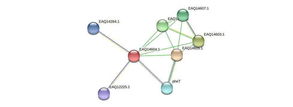 RB2654_18513 protein (Maritimibacter alkaliphilus) - STRING interaction network