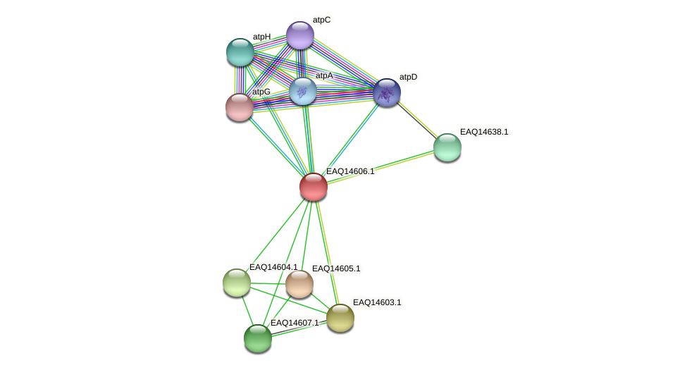 RB2654_18523 protein (Maritimibacter alkaliphilus) - STRING interaction network