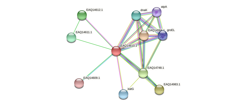 RB2654_18543 protein (Maritimibacter alkaliphilus) - STRING interaction network