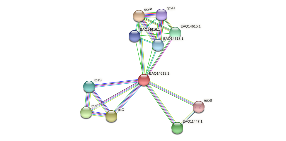 RB2654_18558 protein (Maritimibacter alkaliphilus) - STRING interaction network