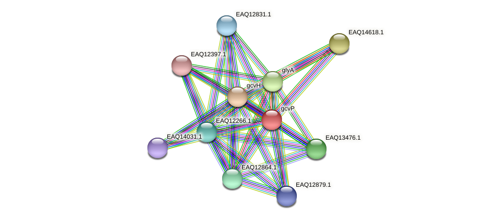 gcvP protein (Maritimibacter alkaliphilus) - STRING interaction network