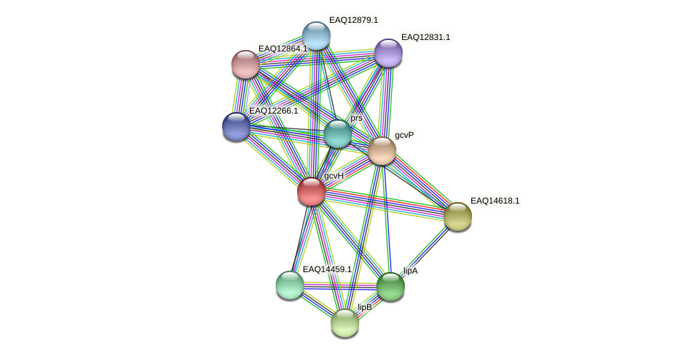 gcvH protein (Maritimibacter alkaliphilus) - STRING interaction network