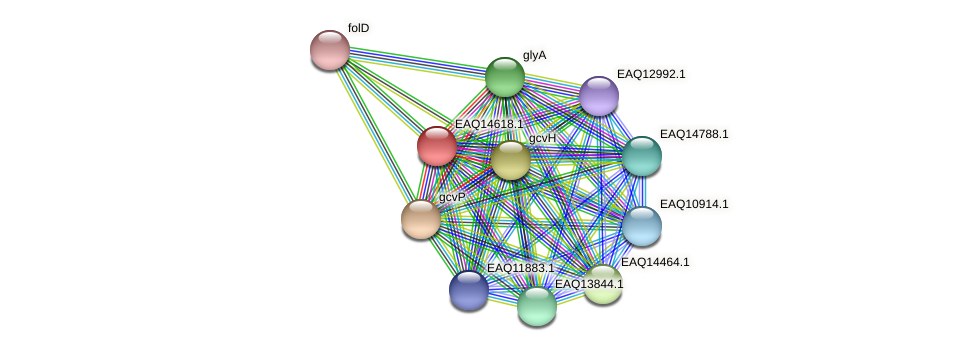 RB2654_18583 protein (Maritimibacter alkaliphilus) - STRING interaction network