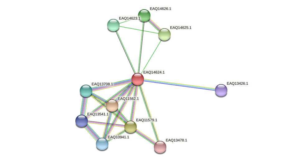 RB2654_18613 protein (Maritimibacter alkaliphilus) - STRING interaction network