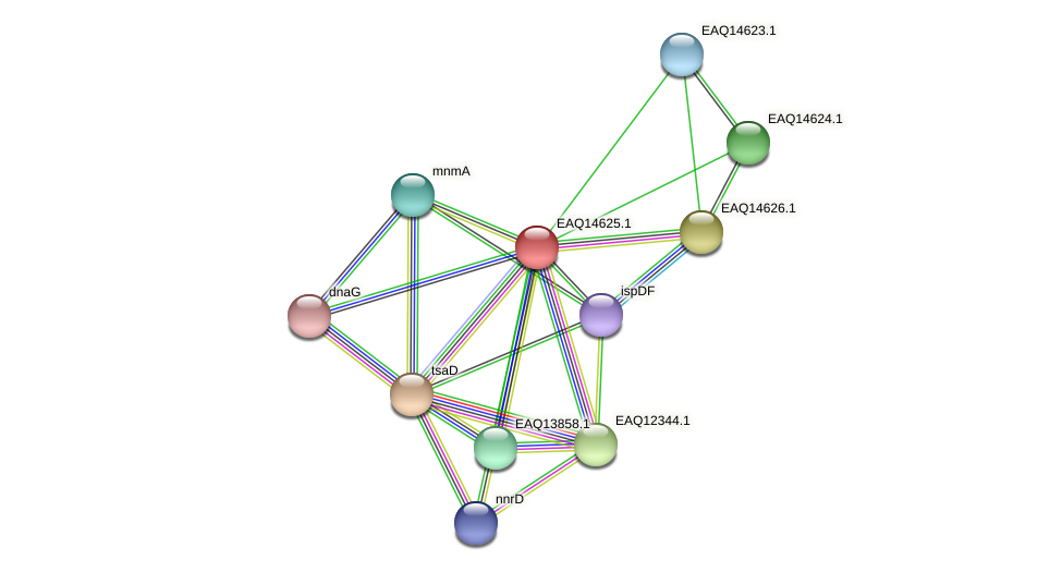 RB2654_18618 protein (Maritimibacter alkaliphilus) - STRING interaction network