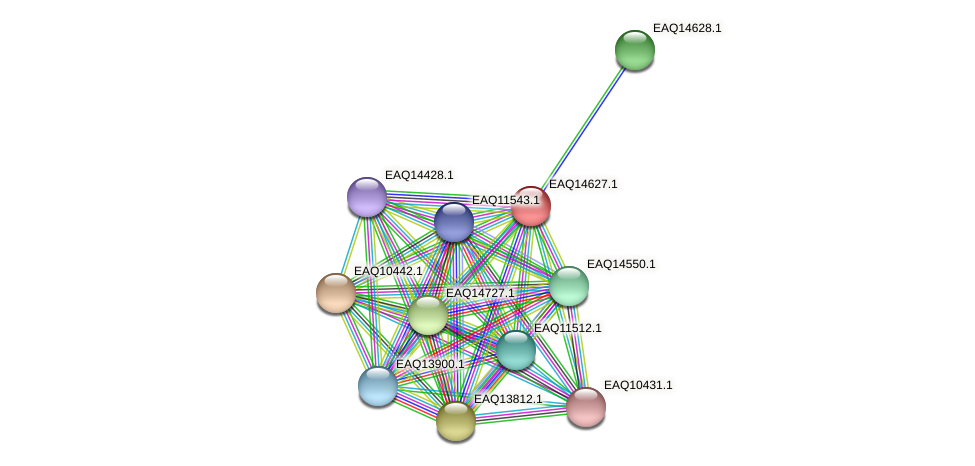 RB2654_18628 protein (Maritimibacter alkaliphilus) - STRING interaction network