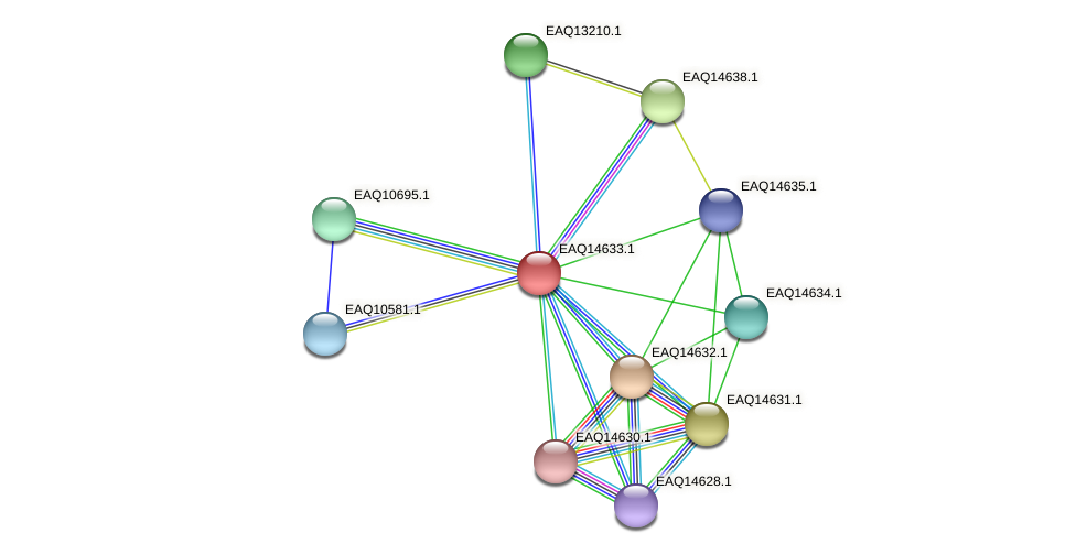 RB2654_18658 protein (Maritimibacter alkaliphilus) - STRING interaction network