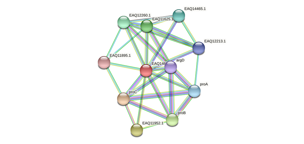 RB2654_18683 protein (Maritimibacter alkaliphilus) - STRING interaction network