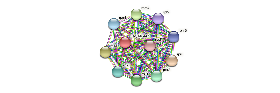 RB2654_18713 protein (Maritimibacter alkaliphilus) - STRING interaction network
