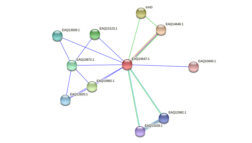 RB2654_18728 protein (Maritimibacter alkaliphilus) - STRING interaction network