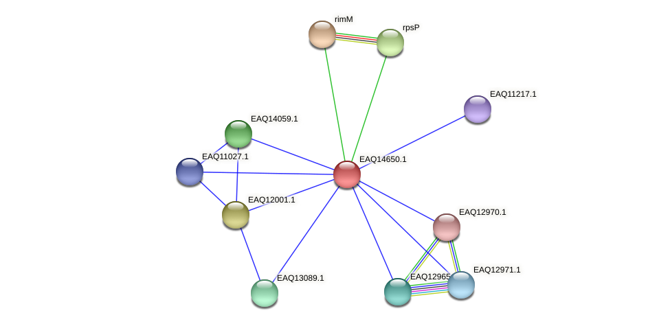 RB2654_18743 protein (Maritimibacter alkaliphilus) - STRING interaction network