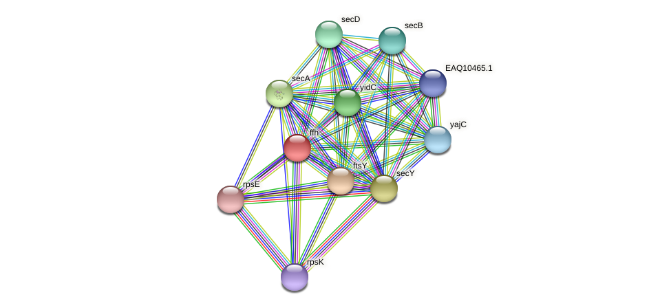 ffh protein (Maritimibacter alkaliphilus) - STRING interaction network