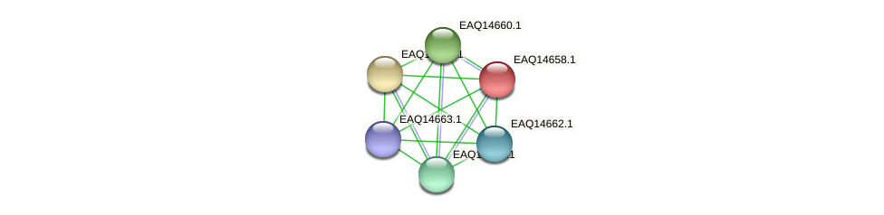 RB2654_18783 protein (Maritimibacter alkaliphilus) - STRING interaction network