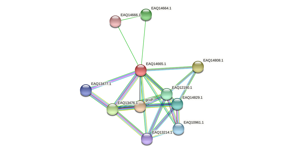 RB2654_18818 protein (Maritimibacter alkaliphilus) - STRING interaction network