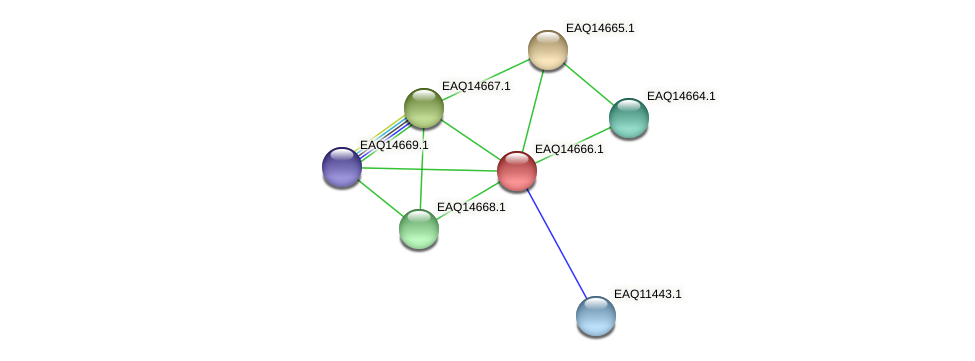 RB2654_18823 protein (Maritimibacter alkaliphilus) - STRING interaction network