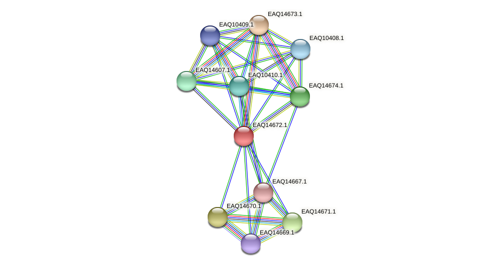 RB2654_18853 protein (Maritimibacter alkaliphilus) - STRING interaction network
