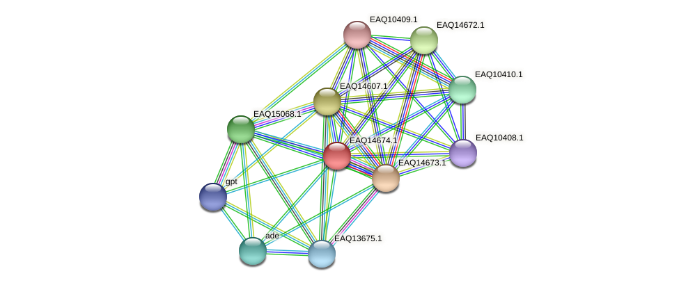 RB2654_18863 protein (Maritimibacter alkaliphilus) - STRING interaction network