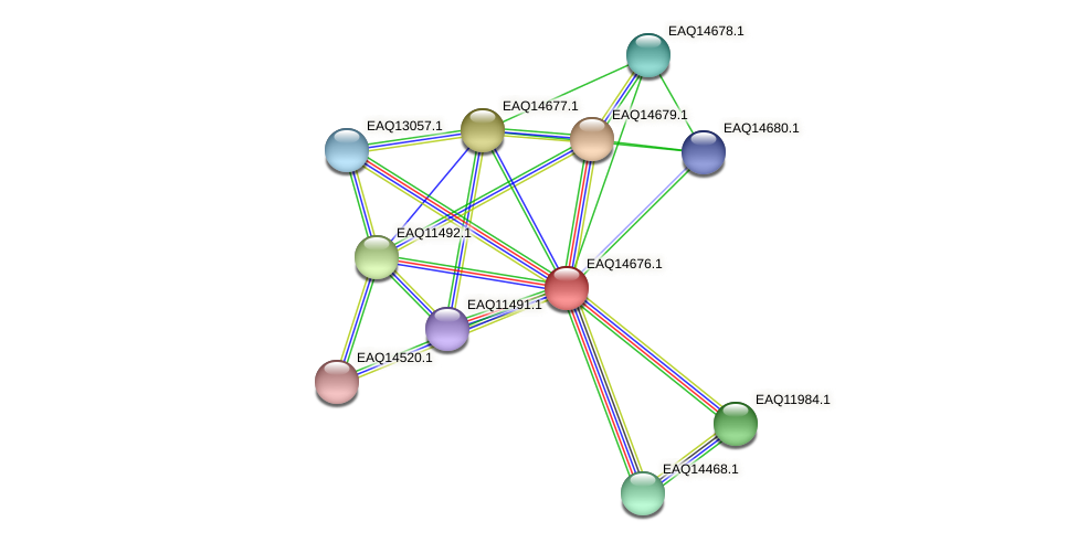 RB2654_18873 protein (Maritimibacter alkaliphilus) - STRING interaction network