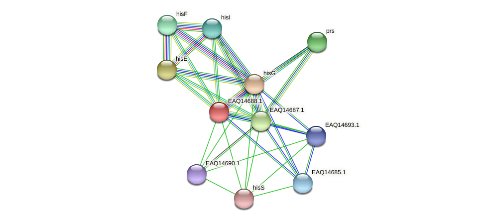 RB2654_18933 protein (Maritimibacter alkaliphilus) - STRING interaction network