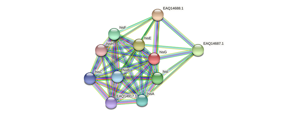 hisG protein (Maritimibacter alkaliphilus) - STRING interaction network
