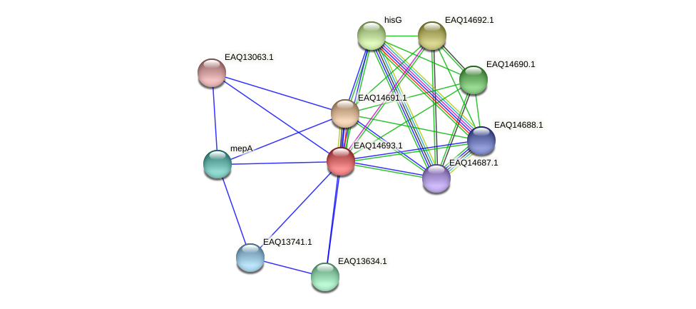 RB2654_18958 protein (Maritimibacter alkaliphilus) - STRING interaction network