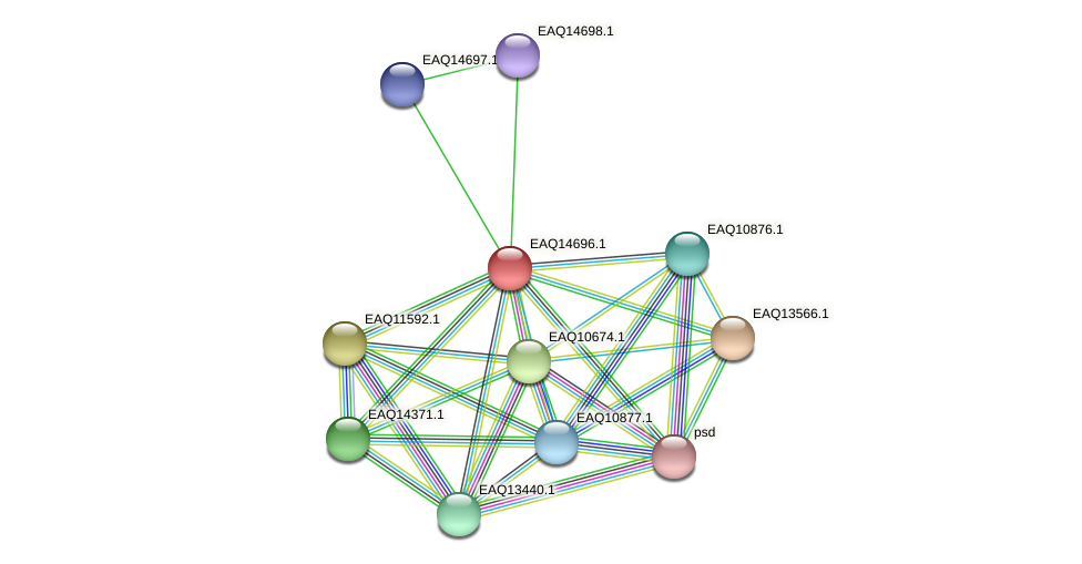 RB2654_18973 protein (Maritimibacter alkaliphilus) - STRING interaction network