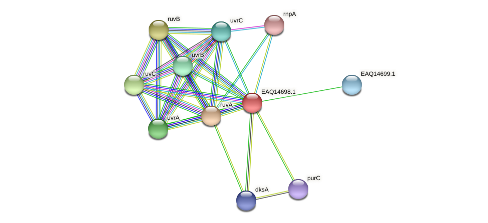 RB2654_18983 protein (Maritimibacter alkaliphilus) - STRING interaction network