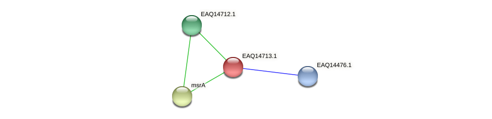 RB2654_19058 protein (Maritimibacter alkaliphilus) - STRING interaction network