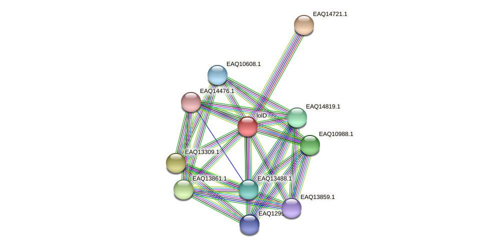 lolD protein (Maritimibacter alkaliphilus) - STRING interaction network