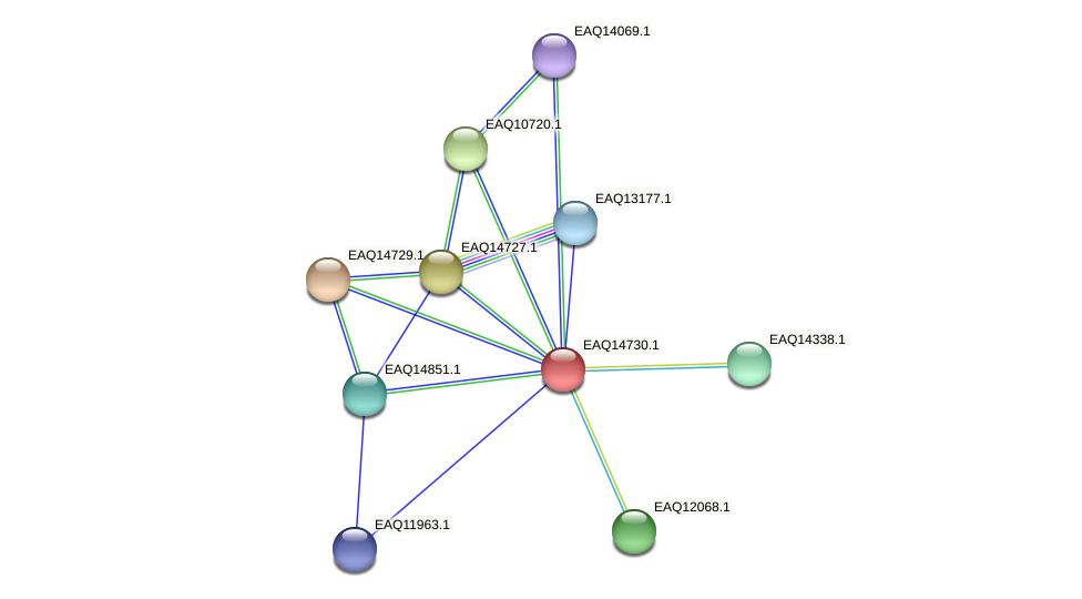 RB2654_19143 protein (Maritimibacter alkaliphilus) - STRING interaction network