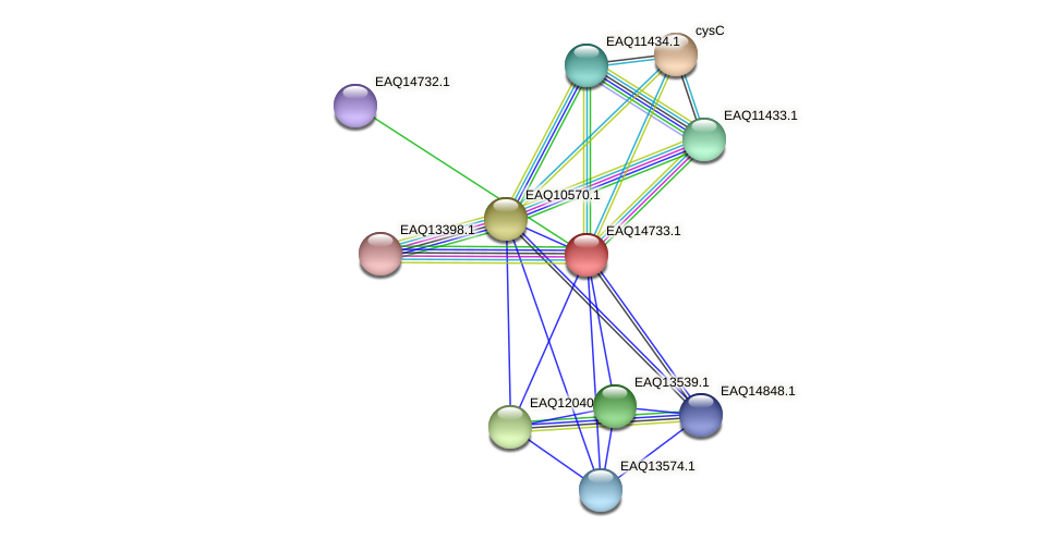 RB2654_19158 protein (Maritimibacter alkaliphilus) - STRING interaction network