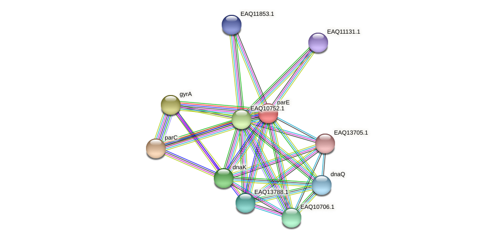 parE protein (Maritimibacter alkaliphilus) - STRING interaction network