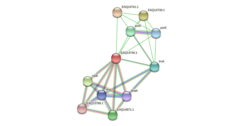 RB2654_19193 protein (Maritimibacter alkaliphilus) - STRING interaction network