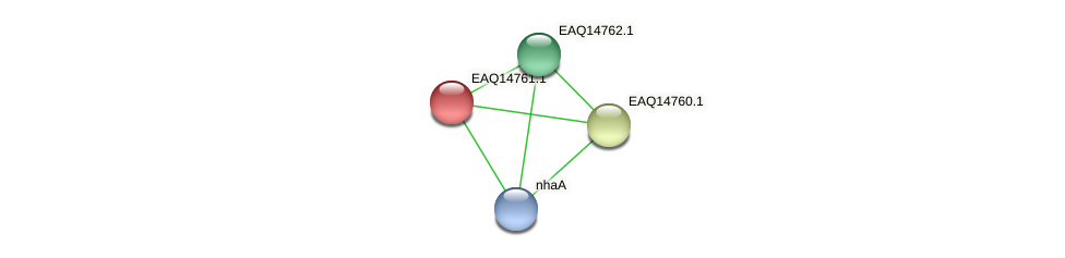RB2654_19298 protein (Maritimibacter alkaliphilus) - STRING interaction network