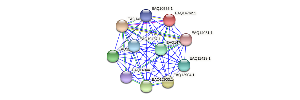 RB2654_19303 protein (Maritimibacter alkaliphilus) - STRING interaction network