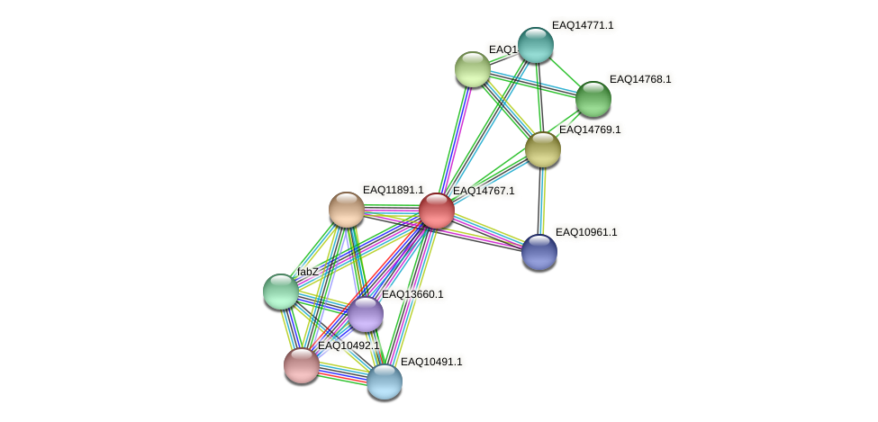 RB2654_19328 protein (Maritimibacter alkaliphilus) - STRING interaction network