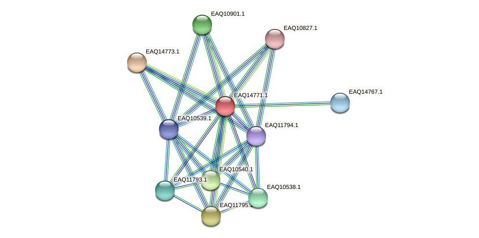 RB2654_19348 protein (Maritimibacter alkaliphilus) - STRING interaction network
