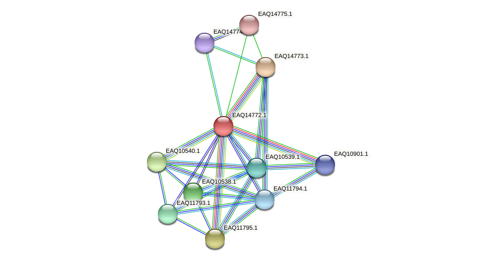 RB2654_19353 protein (Maritimibacter alkaliphilus) - STRING interaction network