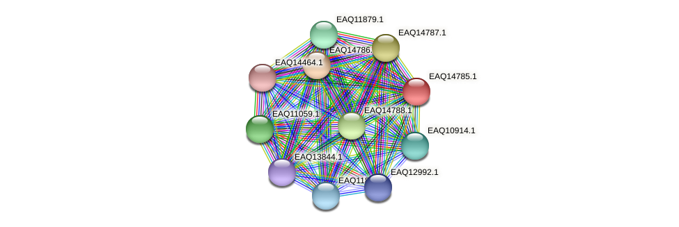 RB2654_19418 protein (Maritimibacter alkaliphilus) - STRING interaction network