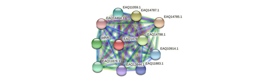 RB2654_19423 protein (Maritimibacter alkaliphilus) - STRING interaction network