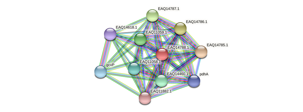RB2654_19433 protein (Maritimibacter alkaliphilus) - STRING interaction network
