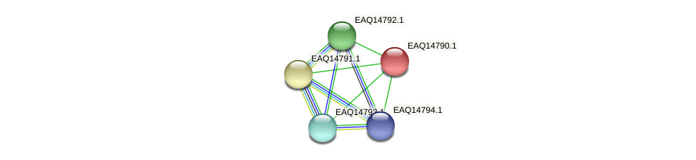 RB2654_19443 protein (Maritimibacter alkaliphilus) - STRING interaction network