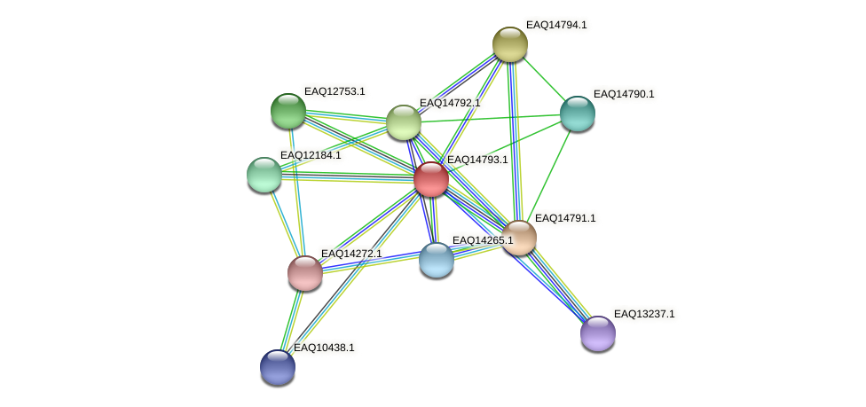 RB2654_19458 protein (Maritimibacter alkaliphilus) - STRING interaction network