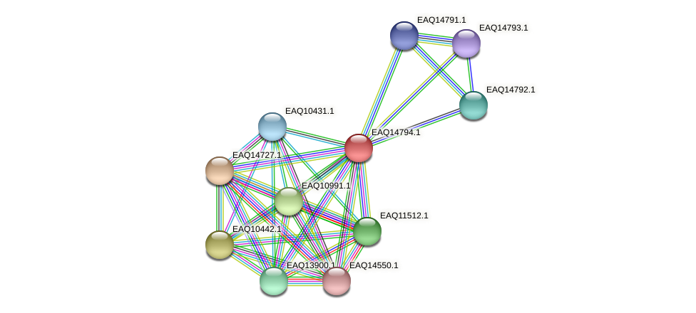 RB2654_19463 protein (Maritimibacter alkaliphilus) - STRING interaction network