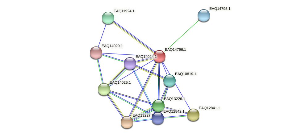 RB2654_19473 protein (Maritimibacter alkaliphilus) - STRING interaction network