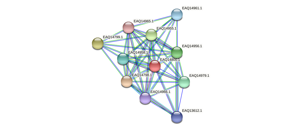 RB2654_19493 protein (Maritimibacter alkaliphilus) - STRING interaction network