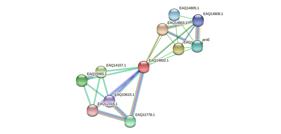RB2654_19503 protein (Maritimibacter alkaliphilus) - STRING interaction network